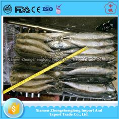 China frozen fish frozen whole round scad mackerel fish.