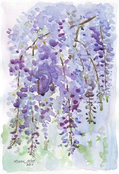 Sketching in Nature: A Friend's Wisteria by Maree