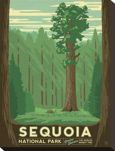 Sequoia National Park - Love the vintage!