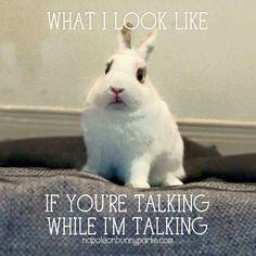 Bunny grump