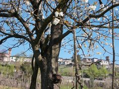 Primavera a Castiglione Garfagnana