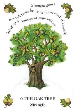 Spruce tree tattoo pine 28 Ideas for 2020 Trees And Shrubs, Trees To Plant, Bach Flowers, Red Maple Tree, Pine Tree Tattoo, Spruce Tree, Celtic Tree Of Life, Herb Seeds, Tree Illustration