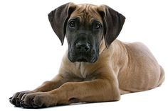 Dawg Business: It's Your Dog's Health!: The Pet PT Pit Stop: Prevention and Management of Hip Dysplasia in Puppies: Attention all Breeders!