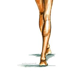 Leg Contouring for Spray Tanning:  The leg muscles on the everyday person are usually more defined than any other muscle group. This is because we use our leg muscles every day to carry around an awful lot of weight—the upper body! To contour, the majority of the leg's airbrushing will be done on the inside and outside of the leg. The center of the leg stays lighter for the most part, to look full and firm whenever light is bounced off of it. Learn more at SprayTanContouring.com…