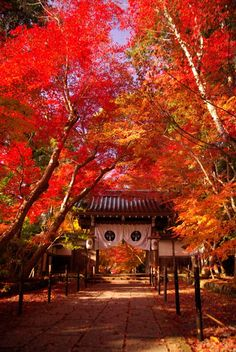 Komyo-ji Temple, Kyoto, Japan #Kyoto #AutumnLeaves #紅葉