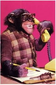 Monkey business: chimp at the call center