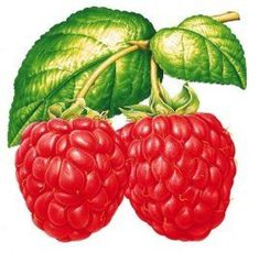 fruit vector graphic