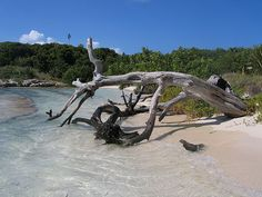 Great Bird Island Antigua