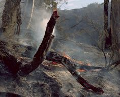 Aftermath of a bushfire NSW // Wouter Vandevoorde