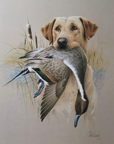 James Killen Yellow Labrador Duck Hunting Art Print-James Killen Yellow Labrador Duck Hunting Art Print Hand Signed by Artist Image Size x Ships from Grandpa Earls Country Store and Gallery in Annandale MN - Duck Hunting Tattoos, Hunting Drawings, Duck Tattoos, Hunting Painting, Hunting Art, Hunting Dogs, Animal Painter, Hunting Pictures, Waterfowl Hunting