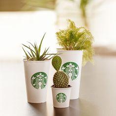Um dia de grãos, outro de sementes. Reutilizar seu copo do café de cada dia pode trazer mais vida à sua decoração. Além disso, o meio ambiente agradece. 💚