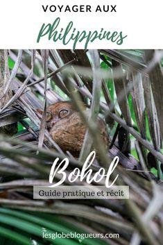 L'île de Bohol est un incontournable lors d'un voyage aux #philippines. Il y a tant à découvrir entre les tarsiers, les chocolate hills, les plages paradisiaques et quelques curiosités culturelles. Voici notre guide pratique ! #voyage #paysages #plages