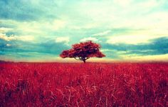 Nature High Resolution Wallpaper