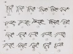 "Ronnie del Carmen on Twitter: ""Marc Davis. 101 Dalmatians (1961) #Animation #Disney Glad to know if I had to study dog animation poses that Marc broke it down for me https://t.co/CzpL0vp8sL"""