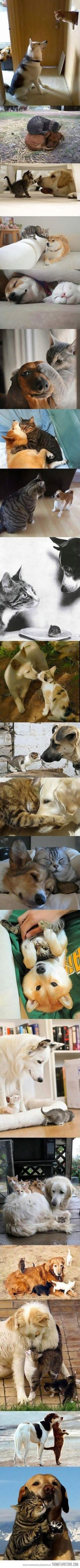 Who says cats and dogs can't get along?