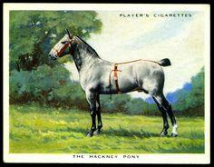 Cigarette Card - The Hackney Pony