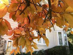 California's Best Fall Color? Go Nevada City!