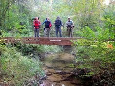 6. Wild Azalea Trail, Kisatchie National Forest  Amazing places to hike in LA