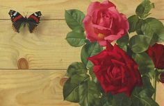 Patrick Hennessy Still Life with Butterfly and Roses 1957 (still life quick heart) Dundee, Be Still, Still Life, Butterfly, Roses, Flowers, Plants, Painting, Heart