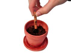 "Literally bloom with ""Sprout,"" the pencil from Democratech that you can plant. By scrapping the eraser and replacing it with a water-activated seed capsule, the end of a pencil marks the beginning of a vegetable, flower, or herb garden Home Vegetable Garden, Home And Garden, Short Plants, Gadgets, Growing Herbs, Mortar And Pestle, Planting Seeds, Crayon, Sprouts"