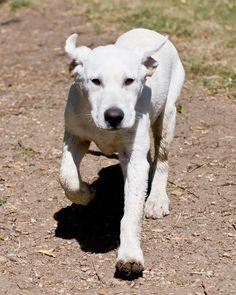 Mac 14 weeks old
