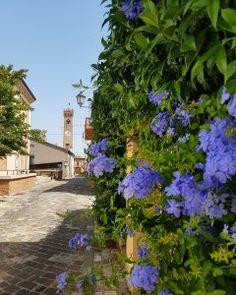 Rimini: manuale di sopravvivenza (al turismo di massa!) Plants, Tourism, Planters, Plant, Planting