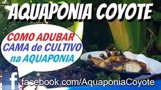 Como adubar cama de cultivo na Aquaponia - 14/02/2017 - Aquaponia Coyote...