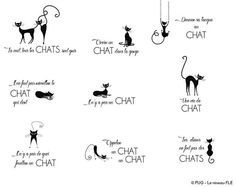 Expressions avec chat