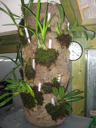 Resultado de imagen para cultivo de orquideas en troncos