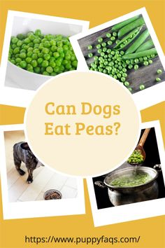 It's a question we've all been tempted to ask. Luckily, the answer is yes! And not just peas-- there are many foods that dogs can eat that you might be surprised about. Check out this list of 10 yummy doggie-approved items and see if your pup has ever tried any of them before! Dog Spaces, Giant Dogs, Cute Baby Dogs, Can Dogs Eat, Dog Rooms, Homemade Dog Treats, Dog Quotes, Dog Accessories, Beautiful Dogs