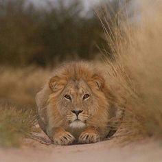 Focus!! | Photo by © Deon De Villiers #babyanimalhd