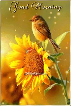 gif by Good Morning Wishes Gif, Good Morning Sister, Good Morning Images Flowers, Good Morning Beautiful Images, Good Morning Inspiration, Good Night Gif, Good Morning Picture, Good Morning Love, Good Morning Greetings