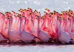 "Image from National Geographic's ""Untamed Americas"" starting tonight.  #VikingPINK"