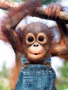 Hasil carian imej untuk cute monkey