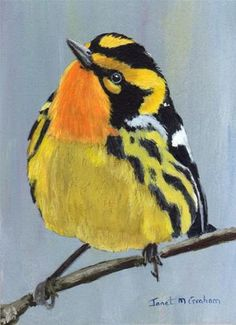 """Blackburnian Warbler ACEO"" by Janet Graham"