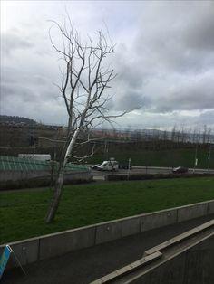 Escultura de árbol SEATTLE Washington