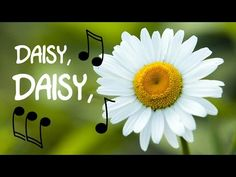 Delightful Daisies -Waiting for the Sun | What-About.co