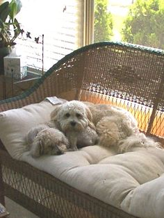 Corky and Taffy - best buds 2001