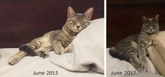 adopted at 9mo now 3 years old - still sleeps the same from day 1 http://ift.tt/2sCAbKg