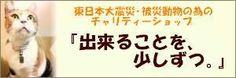 里親さんブログ☆本日、茨城県動物指導センター収容猫全頭引取り ☆幸せに生きたねこ - http://iyaiya.jp/cat/archives/74991