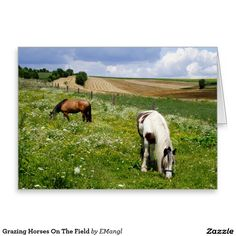 Grazing Horses On The Field #pinto Greeting Card