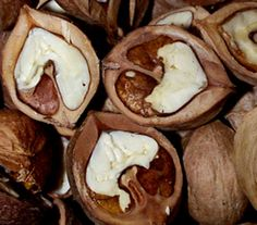 How to easily shell hickory nuts.  photo showing a close-up of half-cut hickory nuts.