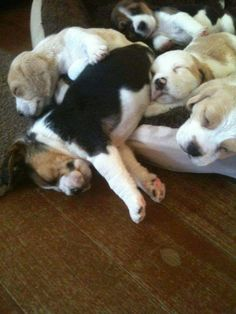 Pup- party all night, sleep all day.