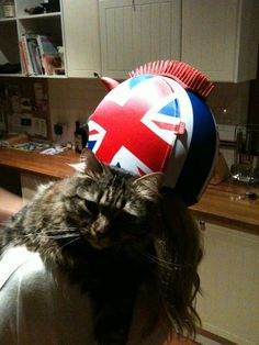 Cats love egg helmets