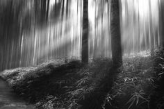 Forest of Confusion by Graham Hewer on 500px