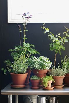 Grow an indoor garden if it can be done in nyc apartment for Indoor gardening nyc