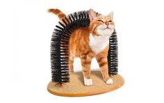 Accesorios para Gatos | La Guía de Urquiza
