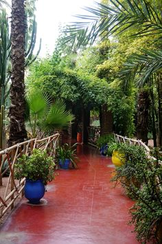 Anisa Sojka travels to Marrakech, Morocco and visits the Jardin Majorelle of…