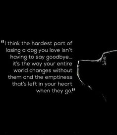 The Hardest Part of Losing a Dog - even months later. Miss you Jasper! Losing A Pet Quotes, Pet Quotes Dog, Pet Loss Quotes, Dog Lover Quotes, Losing A Dog, Animal Quotes, Animal Pics, Pet Loss Grief, Loss Of Dog