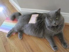 nyan cat tryouts.